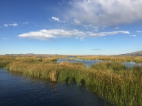 """Reed """"fields"""" and the lake by day"""