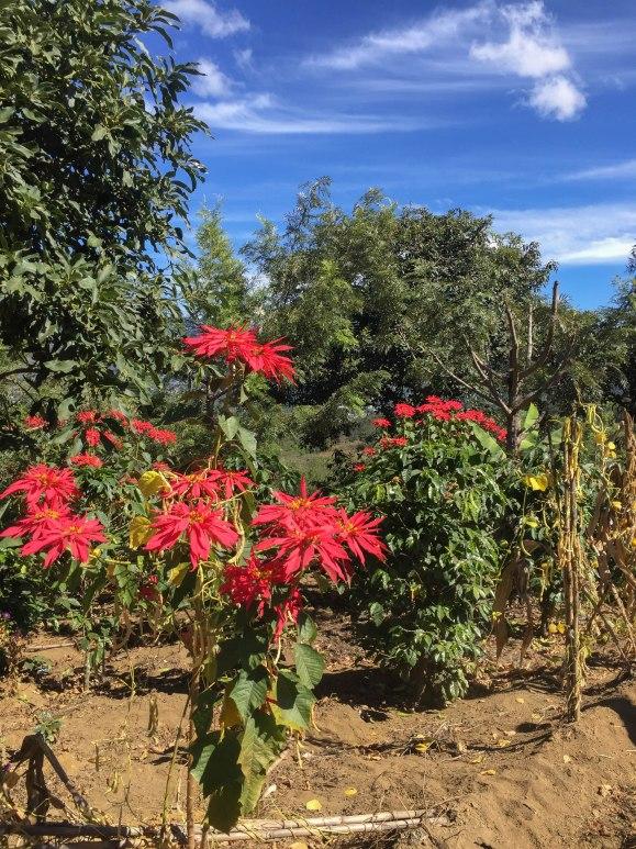 Visit Antigua Guatemala (10 of 21)