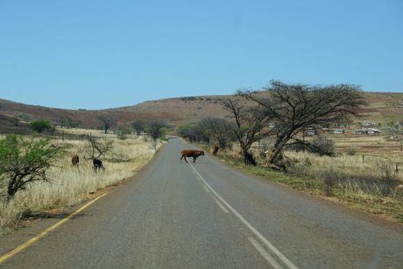 Kruger Park Safari_South_Africa (1 of 28)