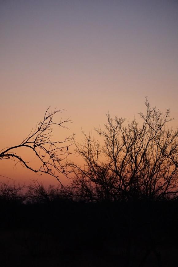 Kruger Park Safari_South_Africa (10 of 28)