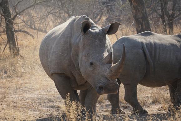 Kruger Park Safari_South_Africa (11 of 28)