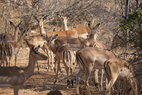 Kruger Park Safari_South_Africa (12 of 28)