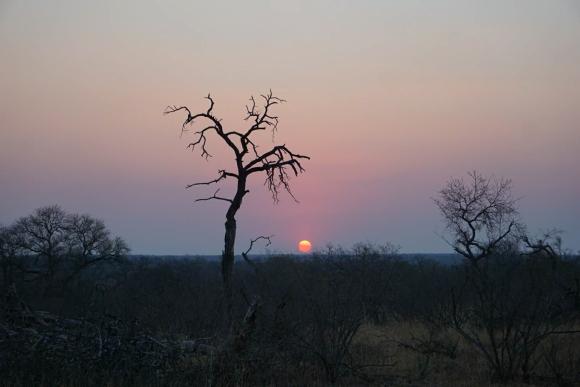 Kruger Park Safari_South_Africa (16 of 28)
