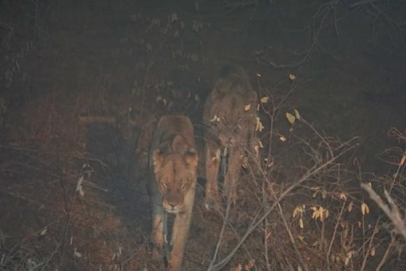 Kruger Park Safari_South_Africa (17 of 28)