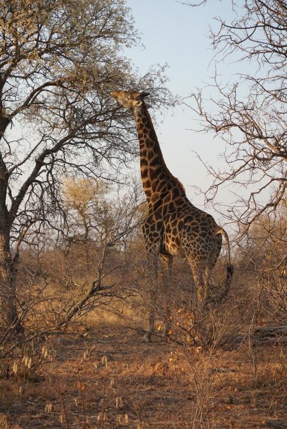 Kruger Park Safari_South_Africa (19 of 28)