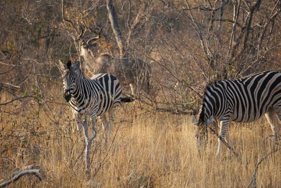 Kruger Park Safari_South_Africa (20 of 28)