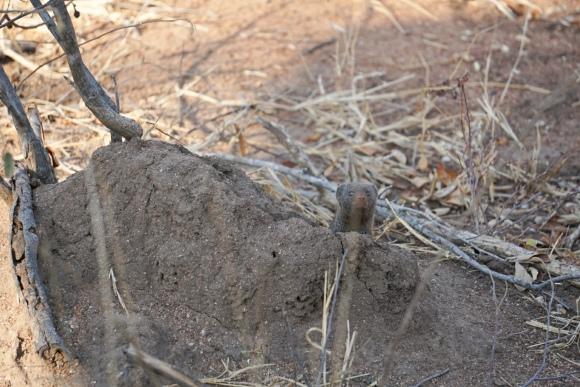 Kruger Park Safari_South_Africa (22 of 28)