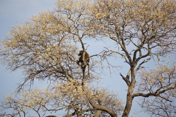 Kruger Park Safari_South_Africa (23 of 28)