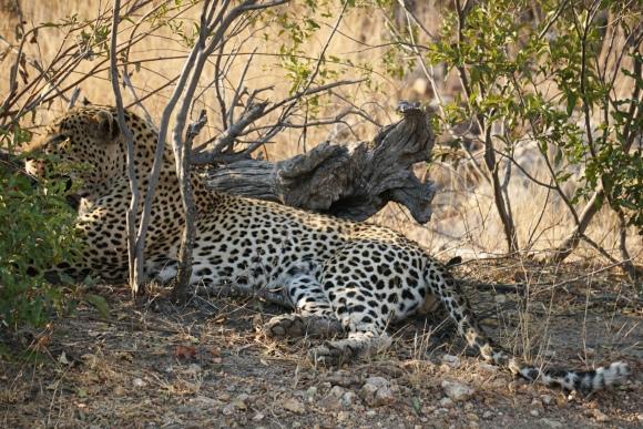 Kruger Park Safari_South_Africa (24 of 28)