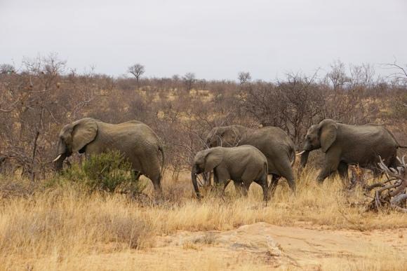 Kruger Park Safari_South_Africa (27 of 28)
