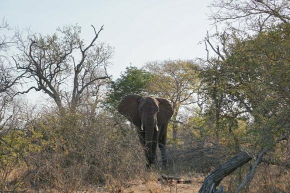 Kruger Park Safari_South_Africa (5 of 28)
