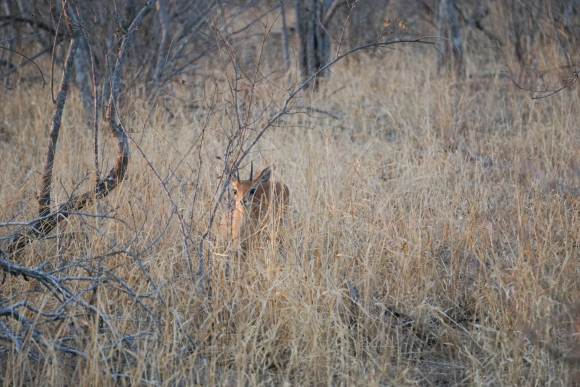 Kruger Park Safari_South_Africa (7 of 28)