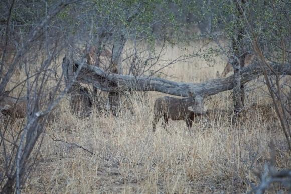 Kruger Park Safari_South_Africa (8 of 28)